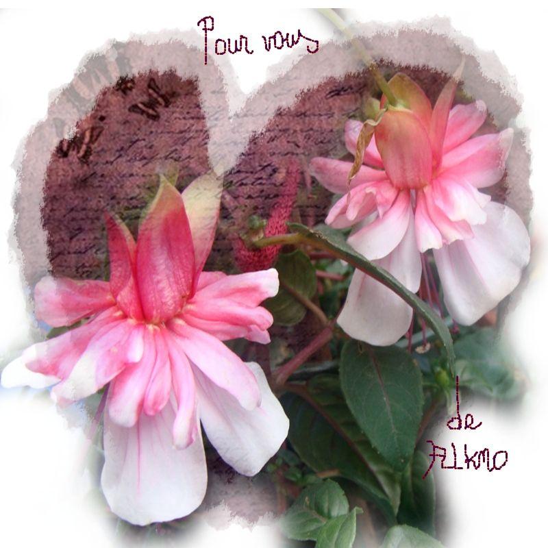 Pour vous ces fleurs de mon jardin for Jardin pour vous